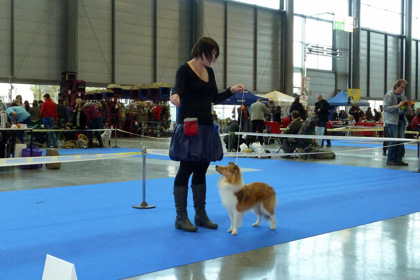 Hanácká Národní výstava psů Brno – 5.1.2013 Naše malé velké vítězství