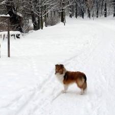 Stromovka v zimě