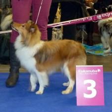 Mezinárodní výstava psů DuoCacib Brno 2.2.2013