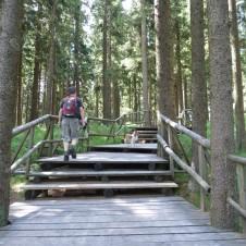 Naše první šumavská tůra na Boubínský prales a rozhlednu Boubín