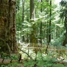 Naše první šumavská tůra na Boubínský prales a rozhlednu Boubí