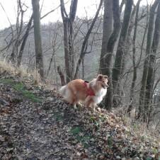 Objevujeme údolí Housle