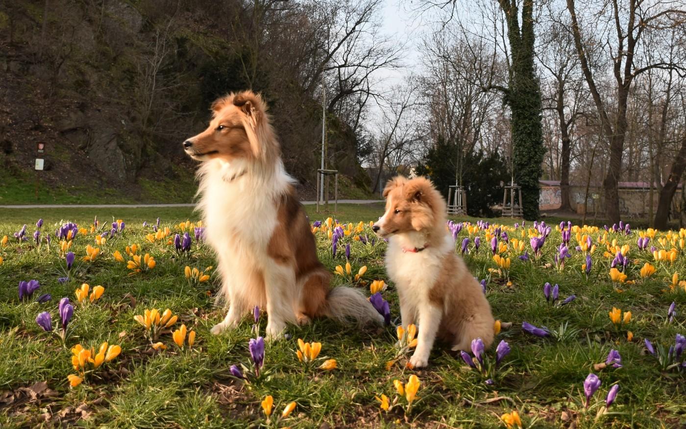 Rozkvetlé krásky Angie a Lilly
