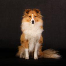 7.1.2017 Hanácká národní výstava psů