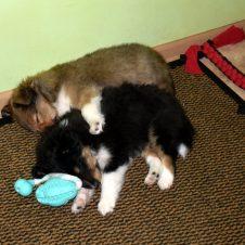 Bastienek ochraňuje sestřičku