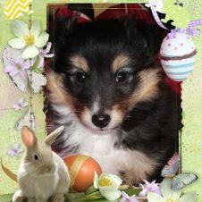 Krásné velikonoční svátky