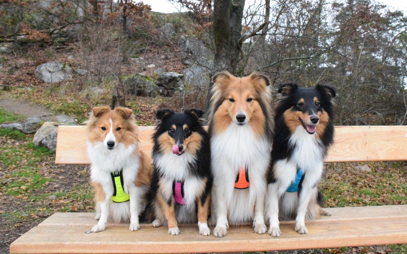 Moje úžasný holky Lilly, Adinka, Angie a Zuzi